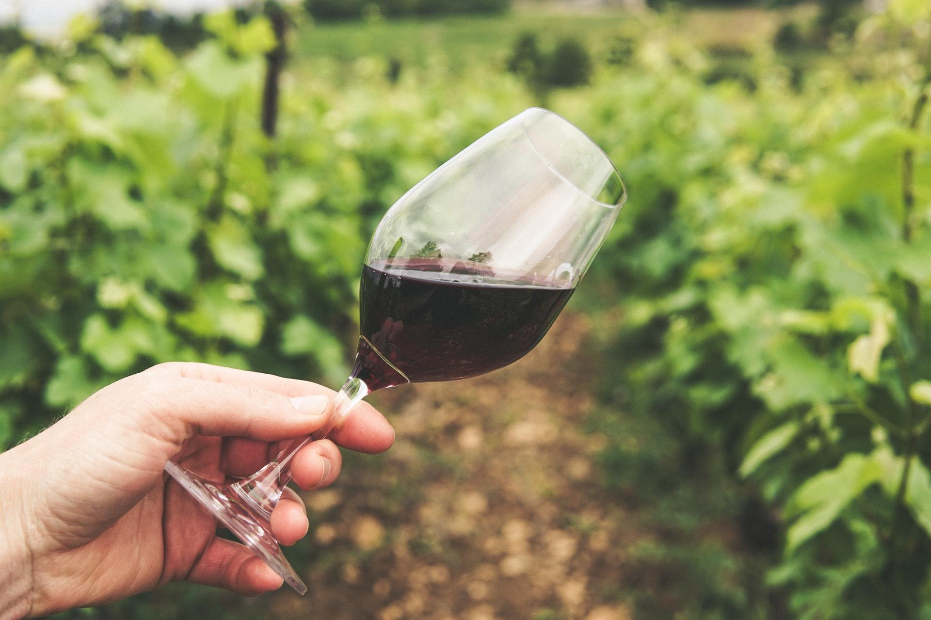 conatvs-primer-puesto-concurso-vinos-agrocanarias